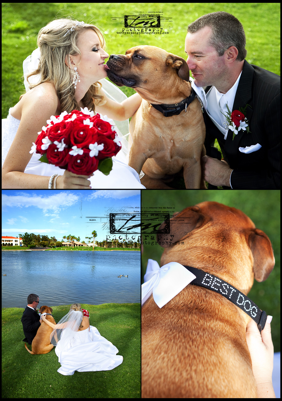 scottsdale wedding photography dog in wedding
