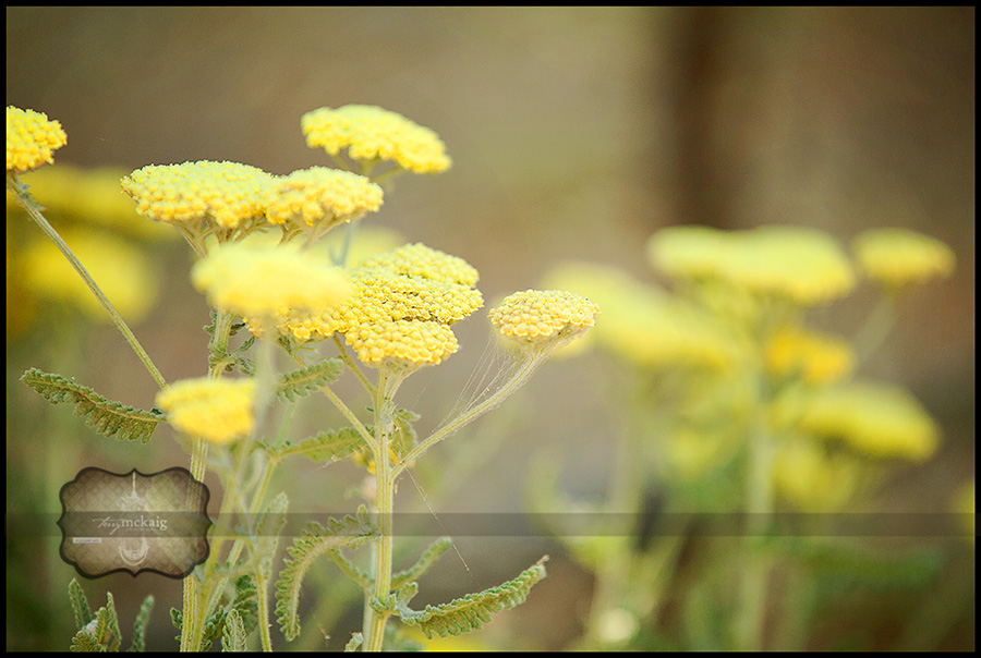 Senior country sessions yarrow flowers Terry McKaig Photography
